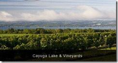 Cayuga Lake and Vineyards