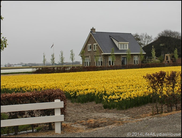 Holland Flower Fields 6