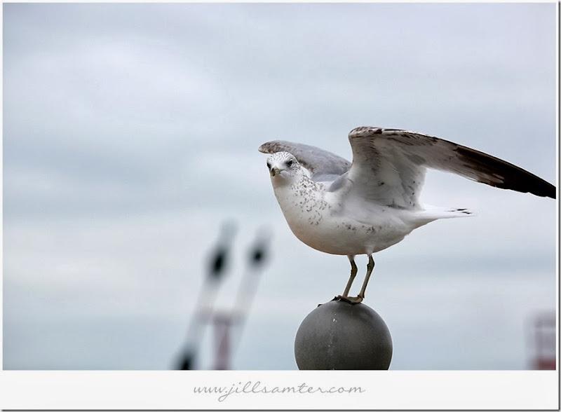birdstand4