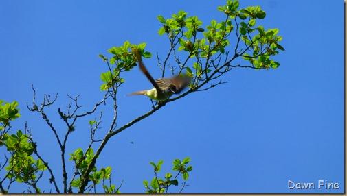 flowersbirds_247