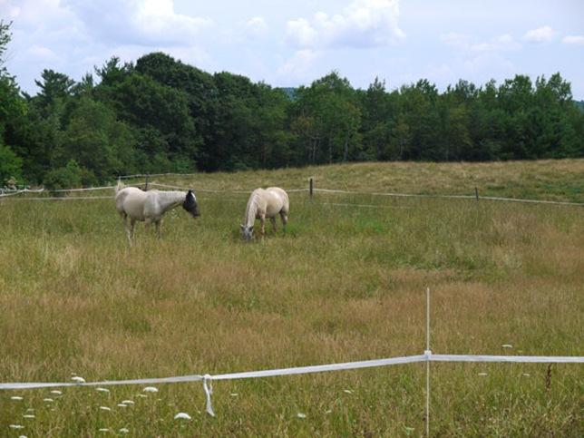 meadow_5