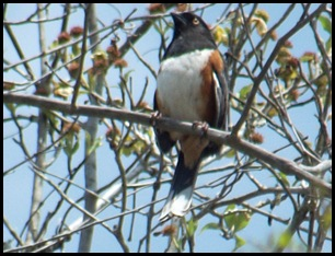 Towhee, cabins and museum 005