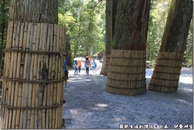 日本伊勢神宮,前往伊勢神宮的路上有許多已有八百年樹齡的伊勢杉,樹幹周圍用竹片圍起來,保護樹幹免被人為破壞,與神宮內的大大小小建築交織出一種莊嚴的氣氛。