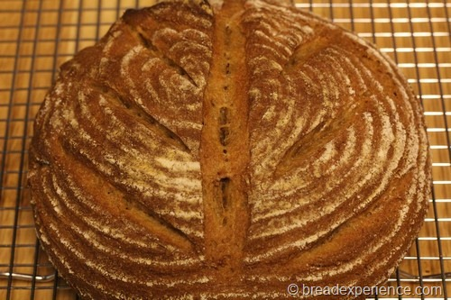 einkorn-bread-sponge29