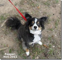 Pepper-Nov-2011