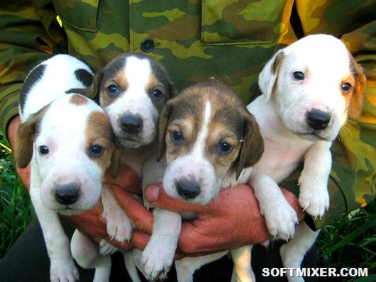 Продажа-собак