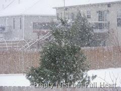 Snow Jan 21 001