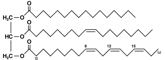 Triglicérides