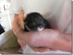 kittens day 1-3  04