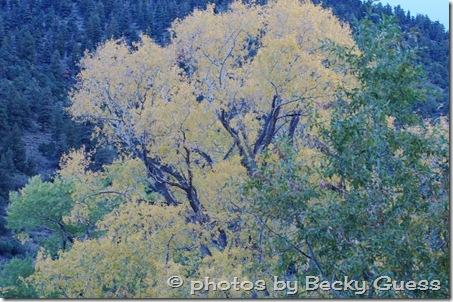 10-05-11 Cimarron Canyon 01