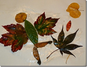 Leaf Man 2
