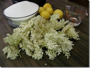Elderflower chapagne