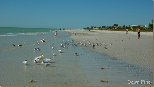 Sanibel Shell and birds_178