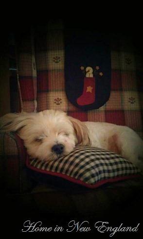 Harley Sleeping