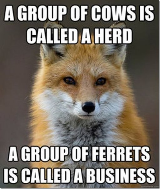 fox-facts-meme-44
