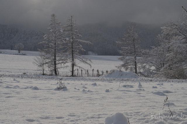 2013-11-28 Snow 003