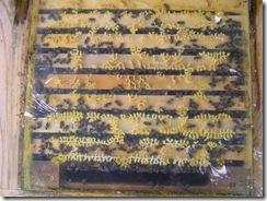 30,10,2011 Pyl a kluci 043
