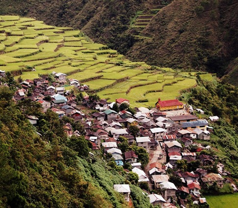 Bay-yo Rice Terraces, Bontoc, Mt. Province.