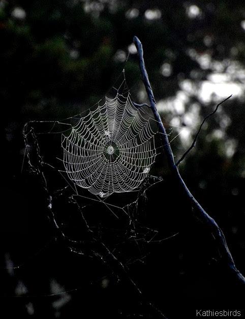 2. web-kab