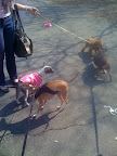 There were also all sorts of other NY canines to meet and greet.
