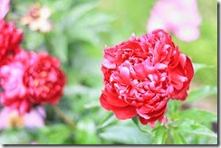 nybg-new-york-botanic-gardens-bronx-025