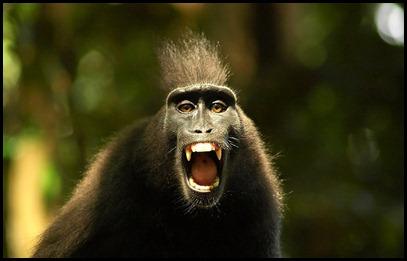 Loud Monkey