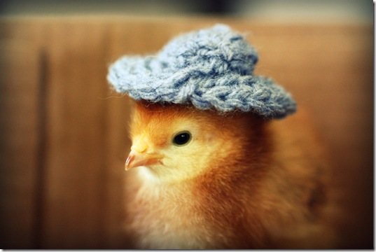 chick-in-hats-7