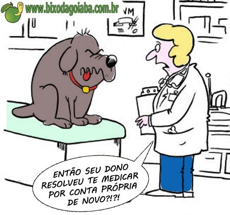 auto-medicação-animal-veterinaria