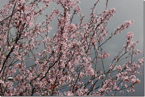 12.03.18 spring walk 010