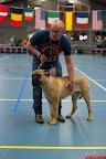 20130511-BMCN-Bullmastiff-Championship-Clubmatch-1568.jpg