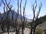 Papandayan - Gunung Puntang seen through the burnt trees (Daniel Quinn, August 2011)