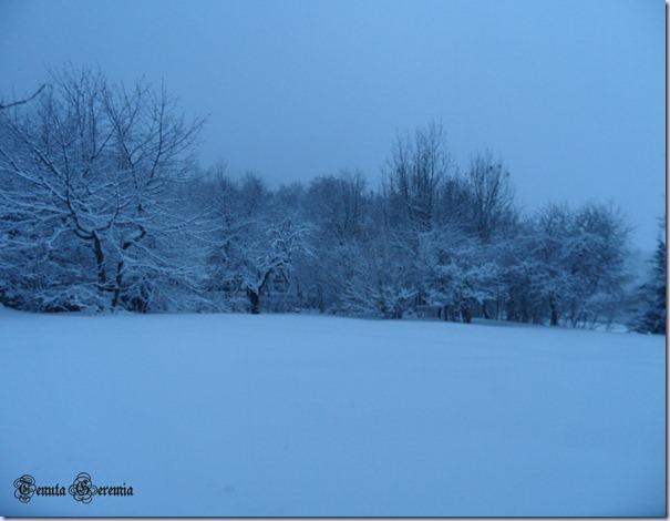bosco alba