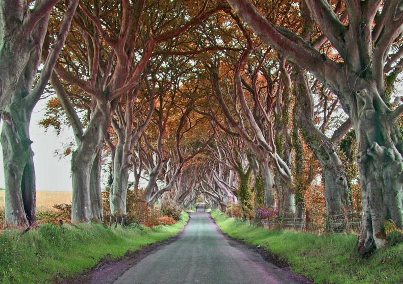dark-hedges-8