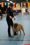 20130511-BMCN-Bullmastiff-Championship-Clubmatch-1551.jpg