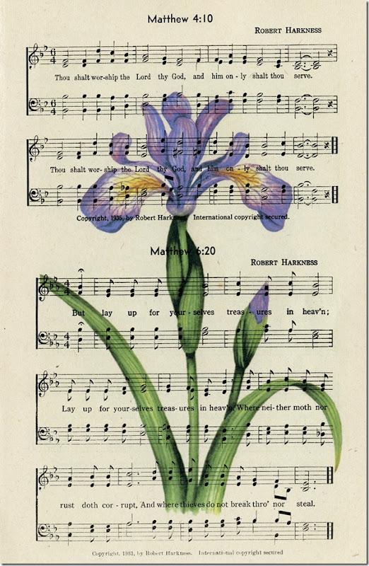 Wild Iris on page