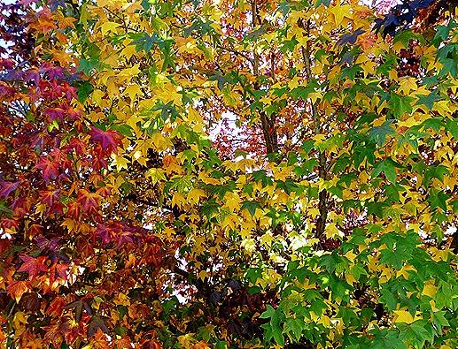Gloria Ishizaka - Outono -  folhas