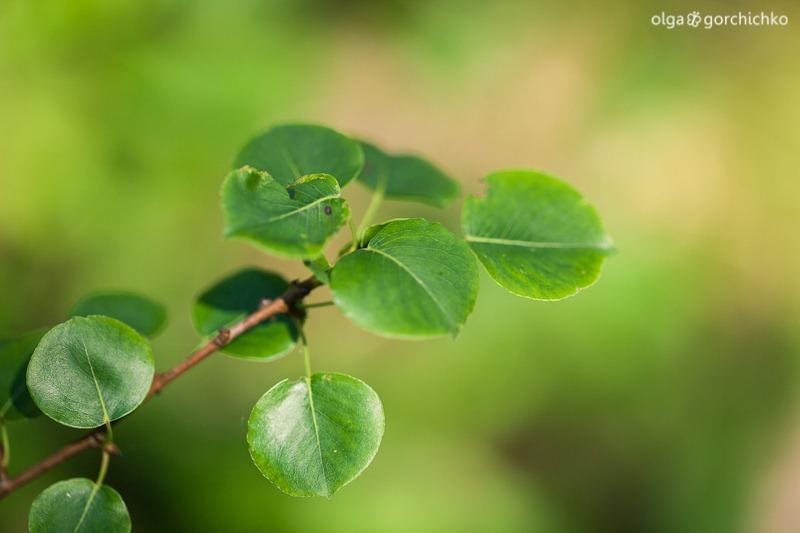 v lesu_06