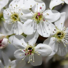 Spring_08.jpg