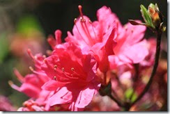 nybg-new-york-botanic-gardens-bronx-002