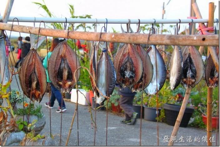 台南-2013井仔腳瓦盤送夕陽。瓦盤鹽田旁有漁民在晾曬一夜乾耶!