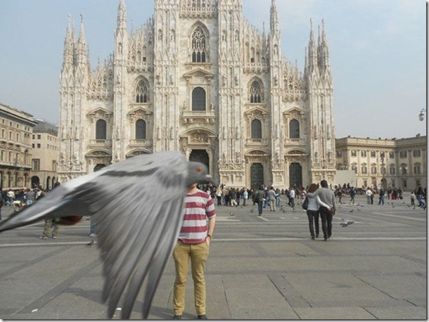 silly-pigeons-birds-7