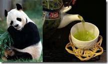 panda poo tea
