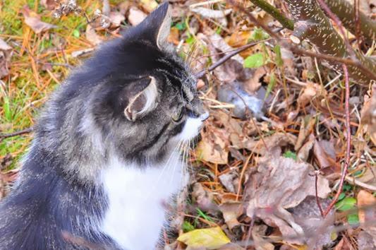 fall_kitchn