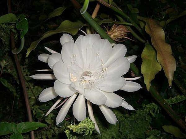 6- Por que algumas flores só exalam seu perfume à noite