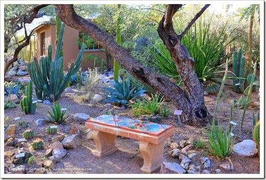 131203_TucsonBotanicalGarden_113