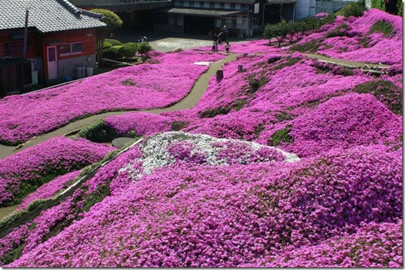 pink-park-japan-14