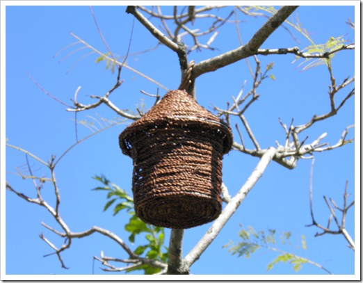 bird house in jacaranda