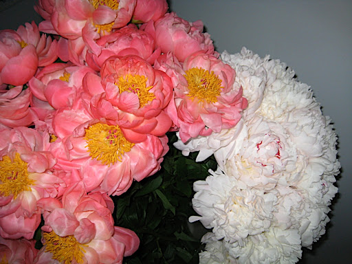 Our beautiful peonies.