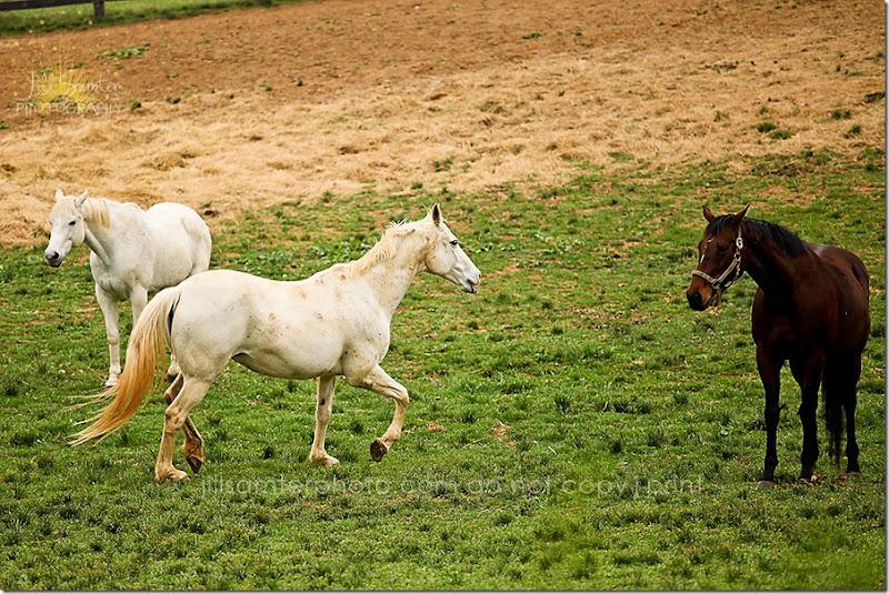 horses-5505