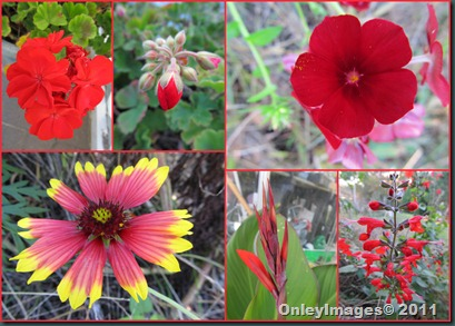 meadow reds1106